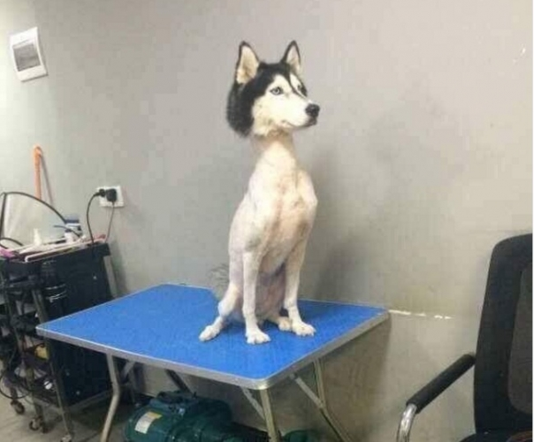 Cortes de pelo en forma de animales